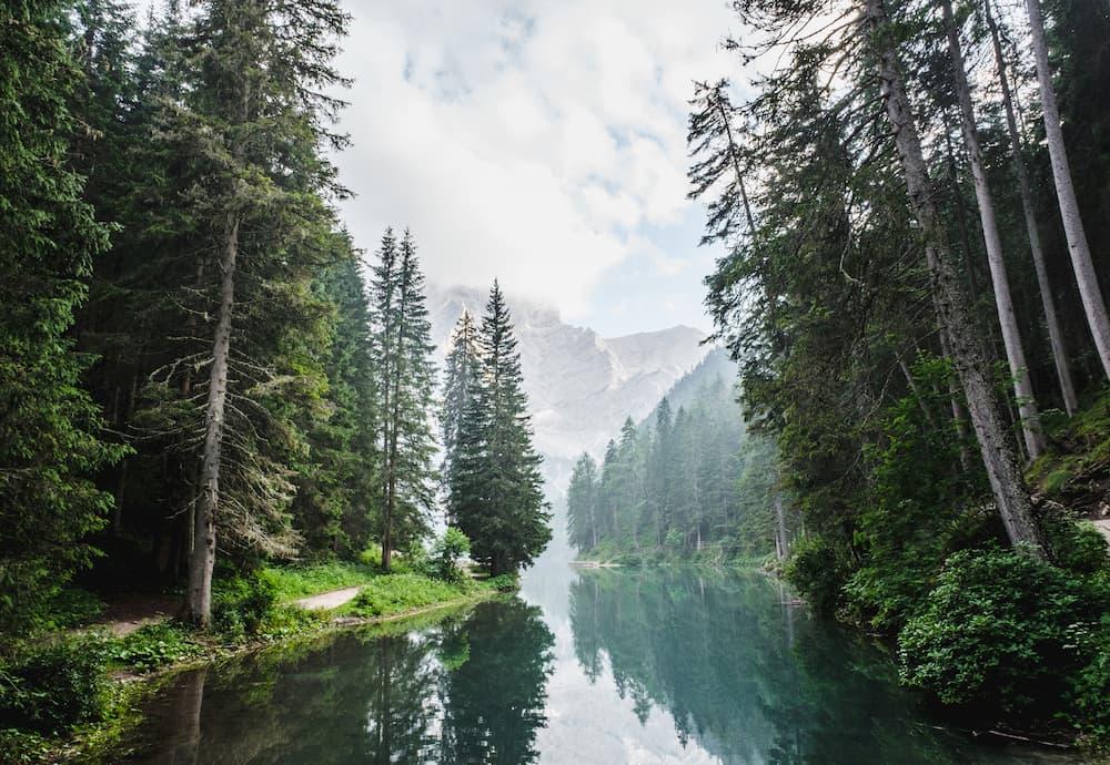 Imagen de un bosque con río cruzando por el medio