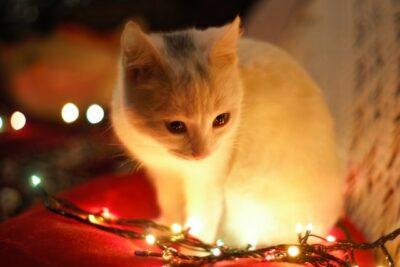 Gato luces de Navidad